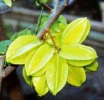 Carambola - Star Fruit